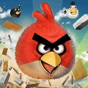 8 Vidéos oiseaux en colère super pour les accros