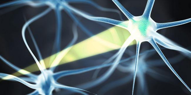 Le contrôle du cerveau avec la lumière: il est possible avec optogénétique