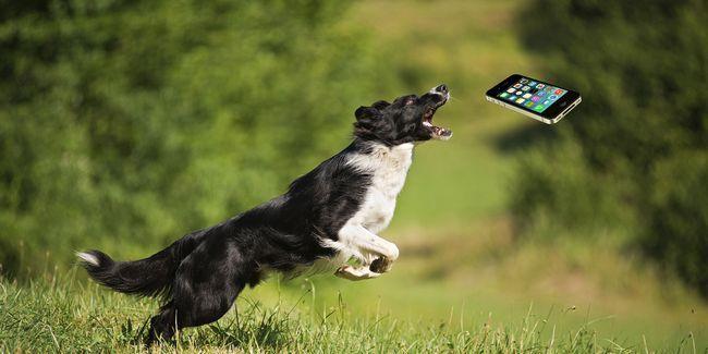 Ces gadgets de formation pour animaux de compagnie garder votre ami à quatre pattes en ligne