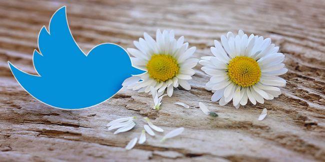 Pourquoi un changement d`algorithme serait la mort de twitter