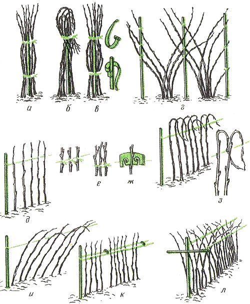 Опоры и подвязка малины, ежевики