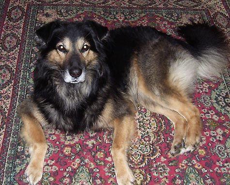 Ветеринарные клиники для животных. История ветеринарного обслуживанияв коми республике